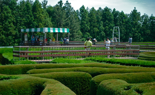 Jeju's first maze park, founded by a worldly person - JEJU WEEKLY on