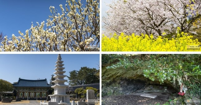 In Jeju, youth walks 'kkodakkodak' (slowly) in spring