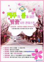 Jeju Spring Cherry Blossoms Photo Contest